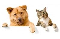 Município promoverá campanhas de combate ao abandono e controle do natalidade de cães e gatos